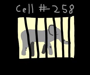 elephant put into jail
