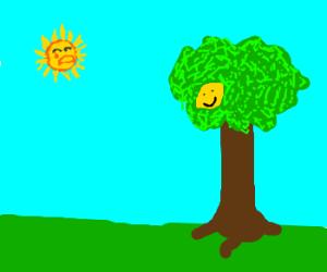 upset sun, happy lemon on a tree