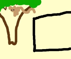 spidermonkey watches plasma tv in tree