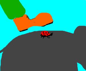 on elephant stepped on a ladybug.