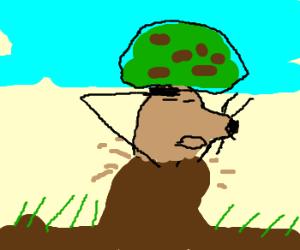 Admiral mole