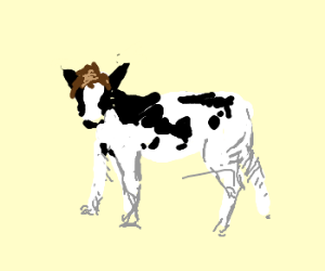 A cow with a toupee