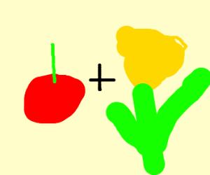 cherry + daffodil