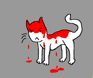Cat is mad and has blood all over him