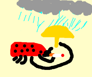 ladybug smoking in the rain