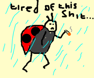 Ladybug lights up in the rain.