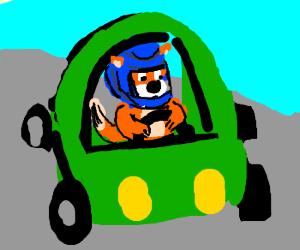 Fox drives, wearing racing helmet