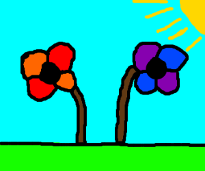 Two Flowers with Multicolor Petals