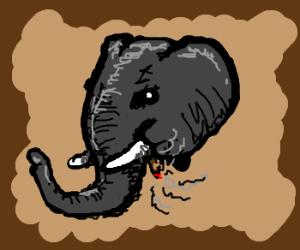 elephant smoking a cigar