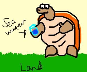 Land sea turtle drinks sea water on land