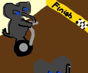 Elephant segway race