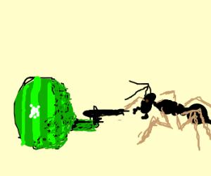 Watermelon assasults an ant