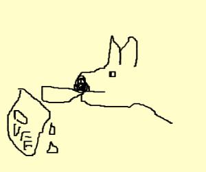 Dog drinking Duff beer.
