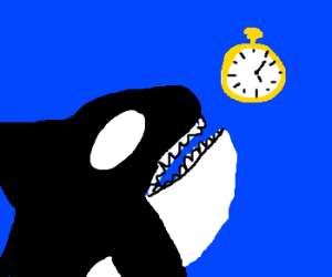 Killer whales:  often guilty of killing time
