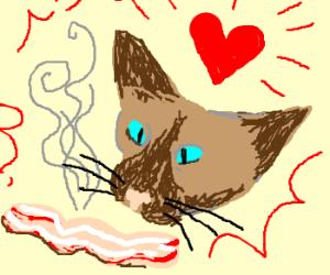 A cute Siamese cat LOVES Bacon