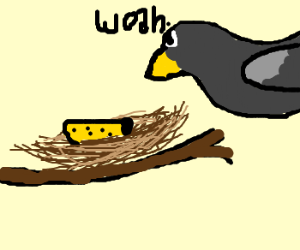 Bird is surprised to see cheese in nest