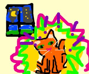 Cat gets night time crazies