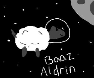 Space-faring sheep