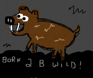 Wildboar in a cavern