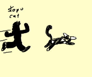 chasing an indifferent cat