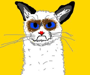 """""""Grumpy cat"""" meme"""