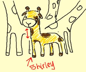 Shirley, the Short Necked Giraffe