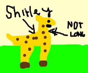 shriley the giraffe with a short neck
