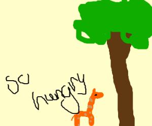 Shirley, The Miniature Giraffe