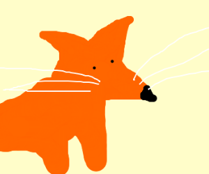 longwhiskerd fox XD