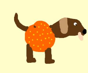 Dog crossed with orange