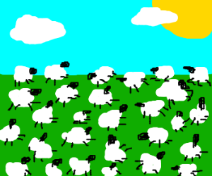 So many sheep!
