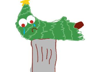 Sad christmas tree is thrown away