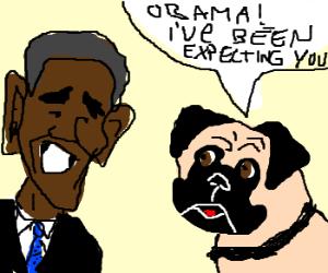 pug awaits obama