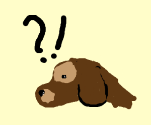 Confused dog