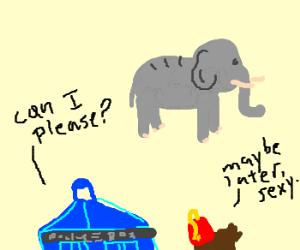 Tardis wants to ride the elephants!
