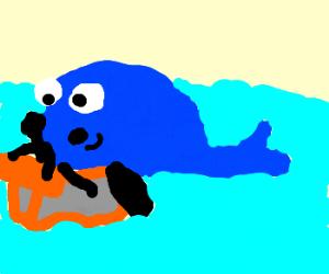 Whale wants a go on the jetski!