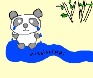Sad panda cries rivers of tears