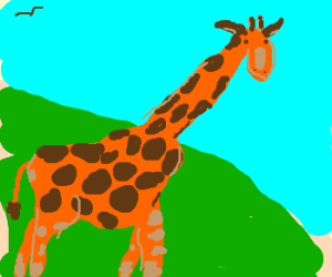 Wibbly bits on top of a giraffe's head