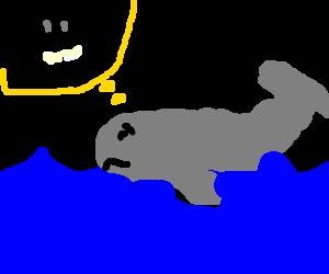 A sad whale swims alone