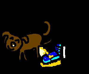A dog pissing an adidas