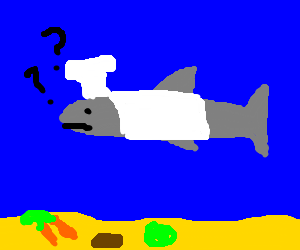Confused shark chef