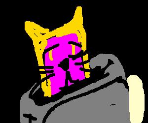 Feline pop-tart