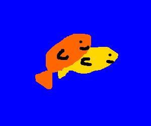 Fish getting laid