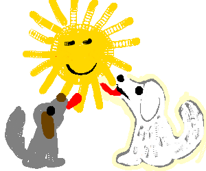 grey and white dog licking the sun