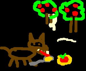 A fox tries apple sauce.