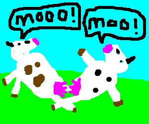 lesbian cows