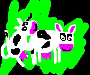 Cows having sex