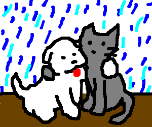 Cat & Dog gently caress each other in the rain.
