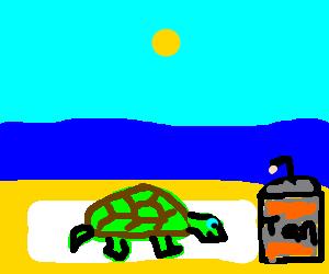 tanning turtle