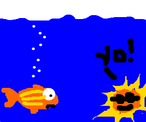 fish finds the sun in the sea